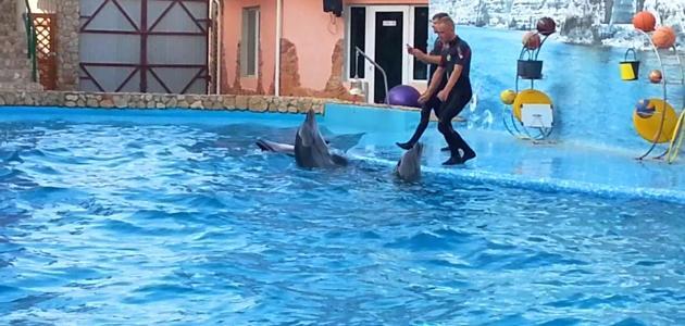 Дельфинарий-Оленевка-Тарханкут-Крым