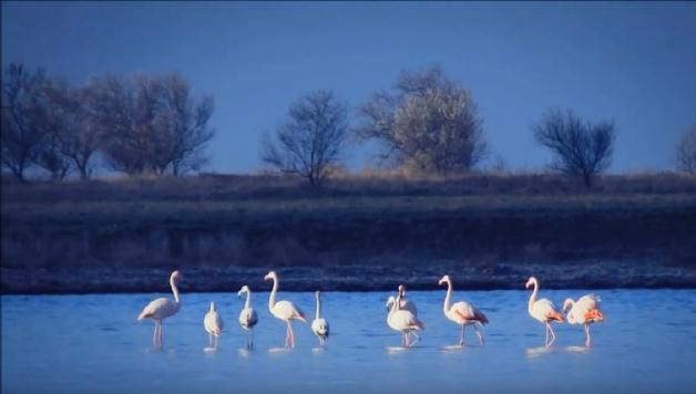 Фламинго в Межводном
